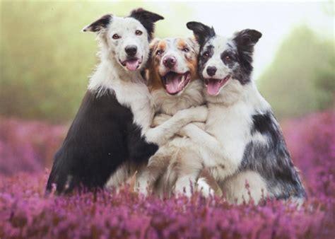 three dogs three dogs hugging birthday card greeting card by avanti press ebay