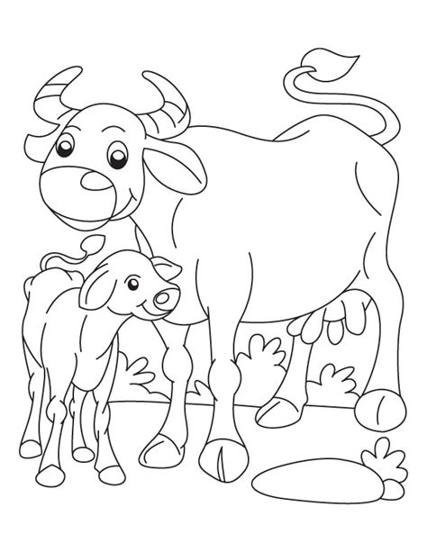 buffalo and calf coloring page download free buffalo and