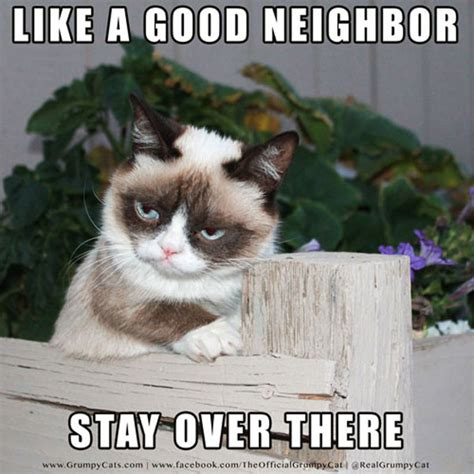 The Grumpy Cat Meme - 16 of the best grumpy cat memes catster