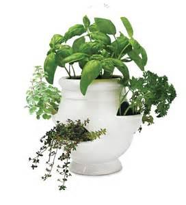 pics photos herb kits grow an indoor herb garden kit