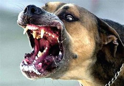 rabies in dogs rabies another threat from the health sci tech jerusalem post