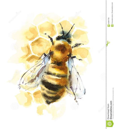 honey bee on honeycomb watercolor illustration stock illustration image 82897795