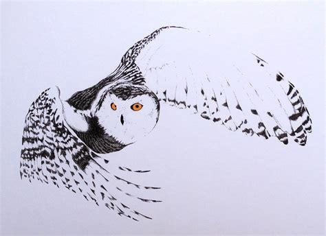 minimalist snow owl pen 11x14 art