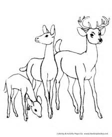 Deer Coloring Page  Family Wild Animal sketch template