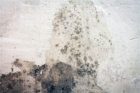 A Killing On Wall 3 ways to kill mold in your home naturally womans vibe