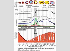 Could the menstrual cycle have shaped the evolution of ... Female Period Cycle