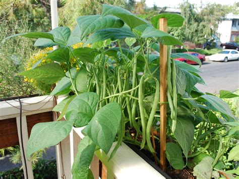 how to do container gardening container gardening vegetables selecting vegetables for