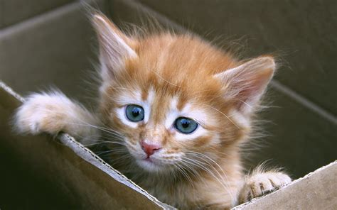 Google Images Kittens | kitten box google skins kitten box google backgrounds