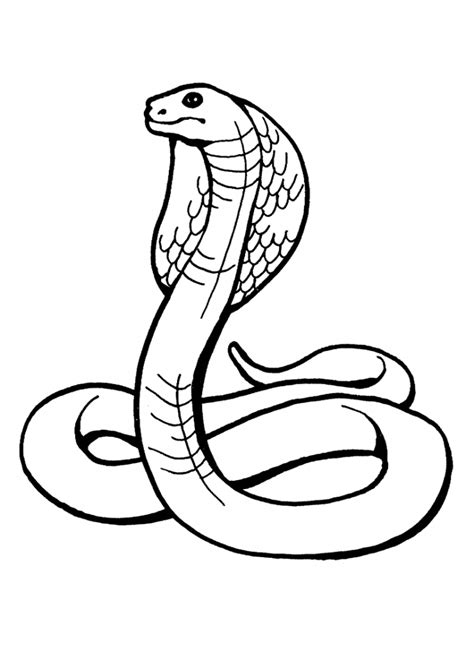 snake coloring page printable free printable snake coloring pages for kids