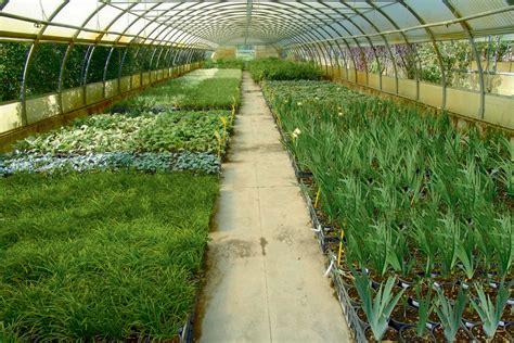 vivaio pavia vivaio garden center in provincia di pavia