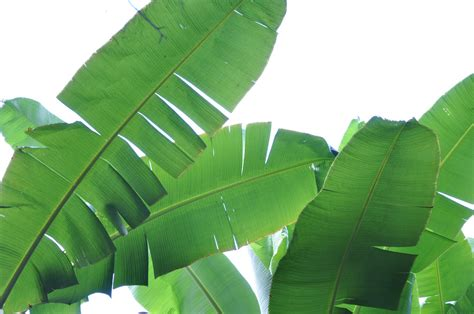 tropical plant leaves tropical leaves leaves of a tropical plant in zanzibar