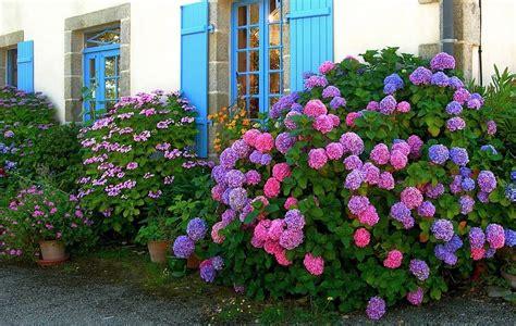 imagenes de jardines con hortensias jard 237 n de hortensias de colores im 225 genes y fotos