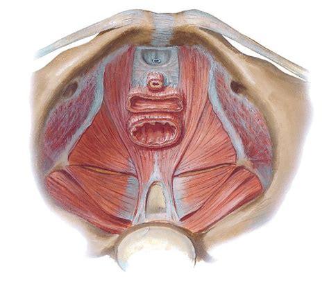 pavimento pelvico femminile mula bandha anatomyoga