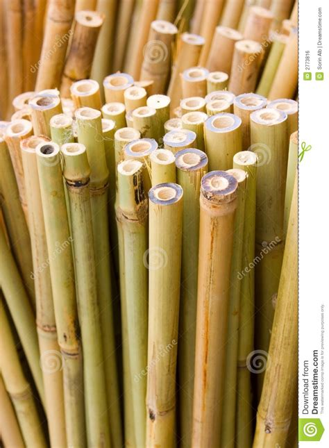 bamboo sticks vertical stock photo image  design cuts
