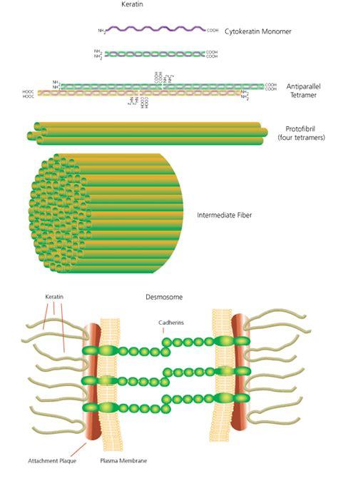 protein keratin keratin sigma aldrich