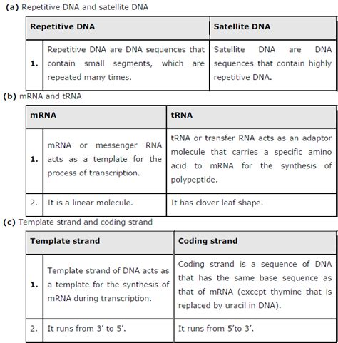 difference between template and coding strand ncert solutions class 12th biology chapter 6 molecular