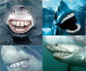 Sharks with nice teeth
