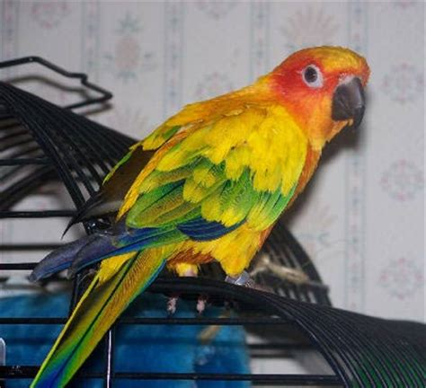 conure care bird care and information for all types of