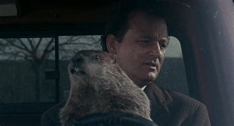 groundhog day driving groundhog day driving gif create discover and on