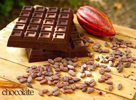 best cacao of the crop davao s journey to becoming the cacao