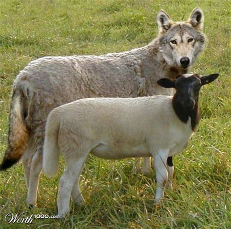 designcrowd wolf 63 best images about idioms and literalisms on pinterest