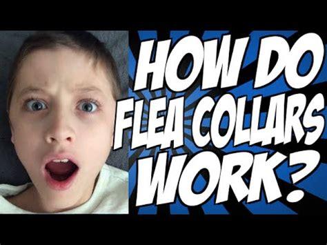 how do collars work how do flea collars work