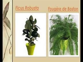 liste des plantes vertes d int 233 rieur
