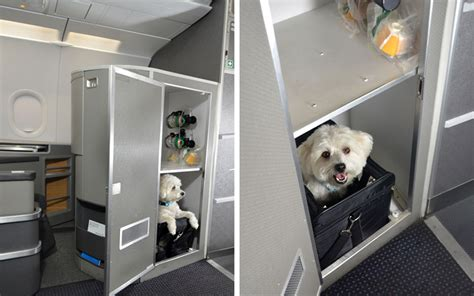 Can Dogs Fly In Cabin by American Airlines Class Cabins For Pets Travel Leisure