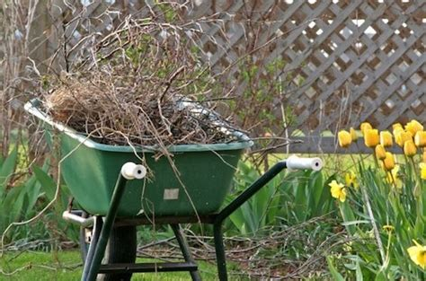 backyard clean up 2016 newsletter 10 celebrate the earth trees flowers