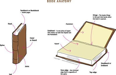 anatomy picture book book design nkd