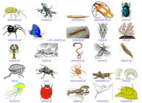 Technoscience | Britt Gow from Hawkesdale P12 College | Page 4 Invertebrates Animals Names