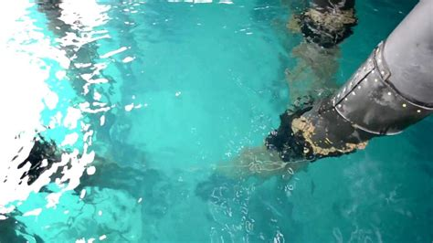 clearest ocean water in the world clearest ocean water avalon catalina youtube