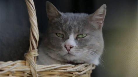 regarder vf oscar et le monde des chats streaming vf film complet trailer du film kedi des chats et des hommes kedi