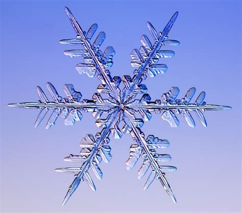 images of christmas snowflakes real snowflakes christmas photo 9447604 fanpop
