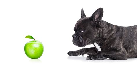 dogs and apples can dogs eat apples and apple peel small fluffy breeds