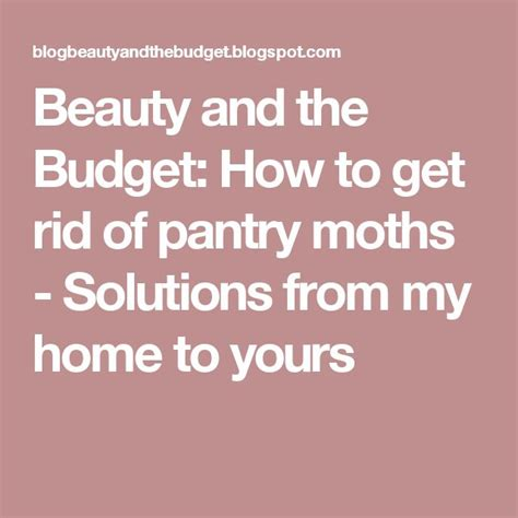 How To Get Rid Of Pantry Pests by 25 Best Ideas About Pantry Moths On Moth