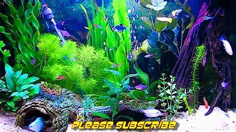 amazing hd aquarium screensaver  windows  android