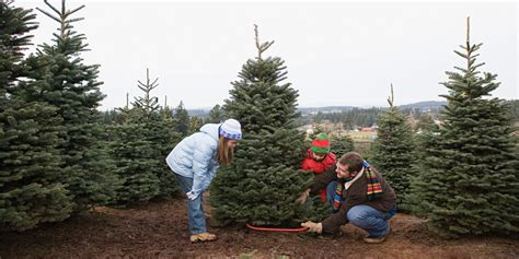 how long do real christmas trees last save the environment chop a real tree michael