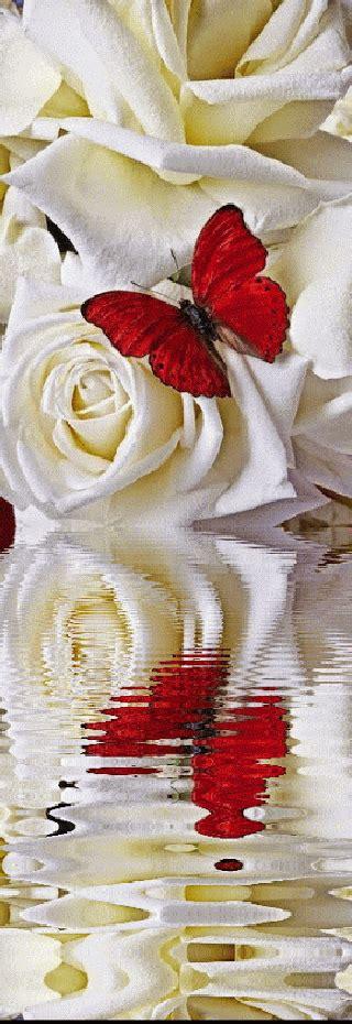 imagenes de rosas amarillas con movimiento imagenes de flores con mariposas con movimiento