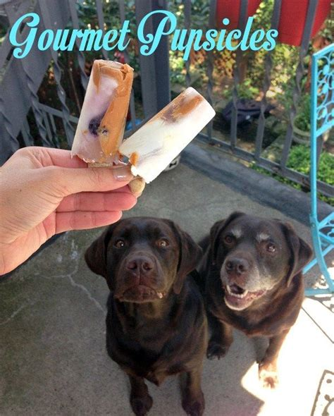 can dogs eat popsicles best 20 popsicles ideas on summer treats frozen treats and