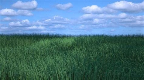 blender tutorial grass creating grass with particles in blender 2 5 blender 3d