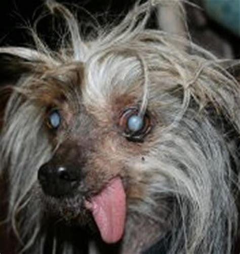 imagenes locas de animales la gente est 225 muy mal la loca que mat 243 a su perro por one