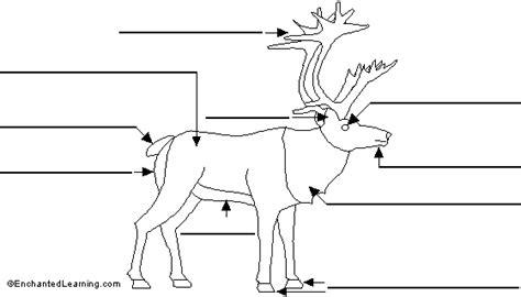 printable reindeer parts label reindeer printout enchantedlearning com