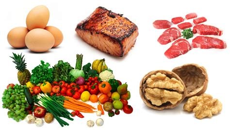 food diet evolution the basis for understanding human nutrition