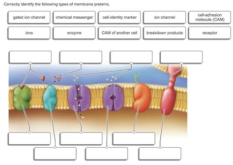 solved correctly identify   types  membrane