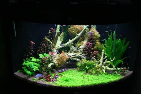 choix des plantes pour un bac avec un faible 233 clairage