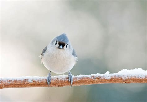 gimme shelter how do birds survive a snow storm audubon