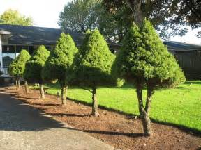 Small Tree - trees for the landscape