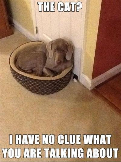 cat    clue    talking
