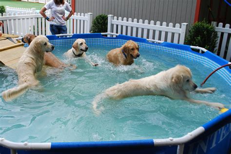 backyard dog pool pool party the dog knowledge